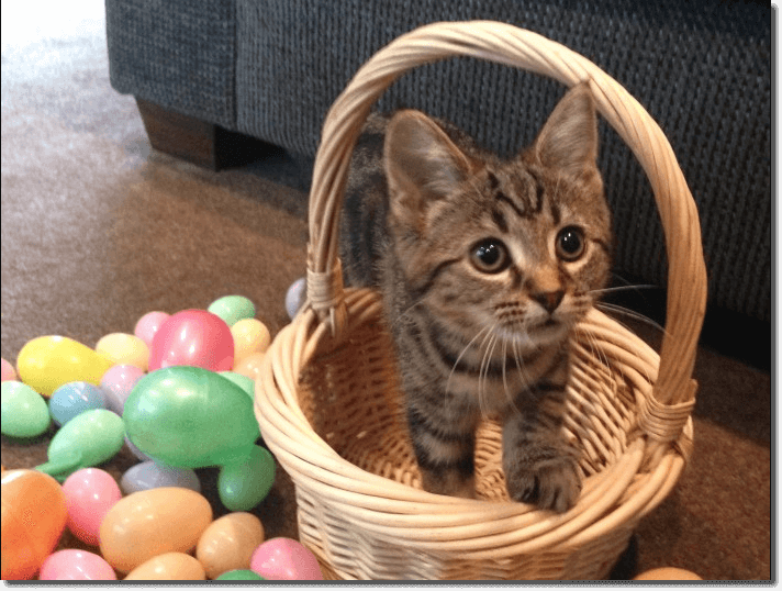 Easter promotion ideas: a pet photo contest. The image shows a striped kitten in a basket, surrounded by brightly colored plastic eggs.