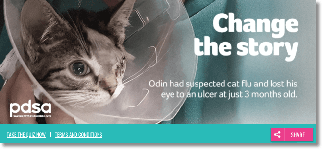 "Banner announcing a quiz to learn more about cat flu. The title is ""Change the Story"" and the photo is a cat with only one eye."
