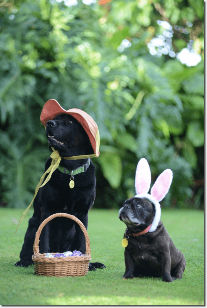 Easter promotion ideas: a pet photo contest. The image shows a large, black dog wearing an orange hat, and a short brown pug wearing pink rabbit ears. They are sitting on a grassy lawn with a basket full of Easter eggs.