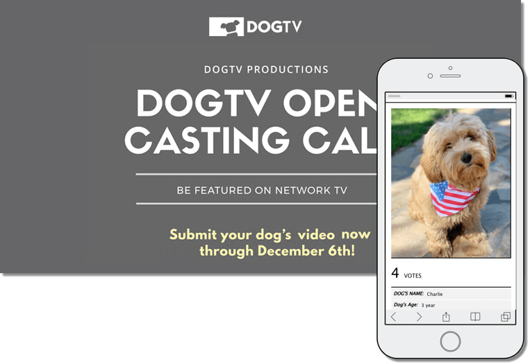 Example of user-generated content campaign by dogtv for world animal day