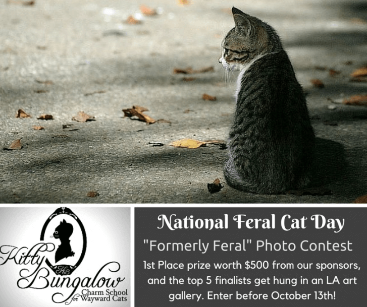 Banner announcing a photo contest for National Feral Cat Day, with cash prizes and photos displayed in an LA art gallery. The picture shows a cat sitting alone in the street.
