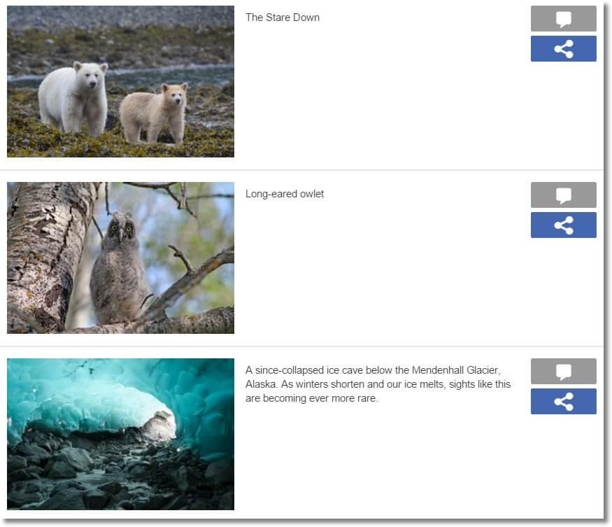 Greenpeace Canada Photo contest