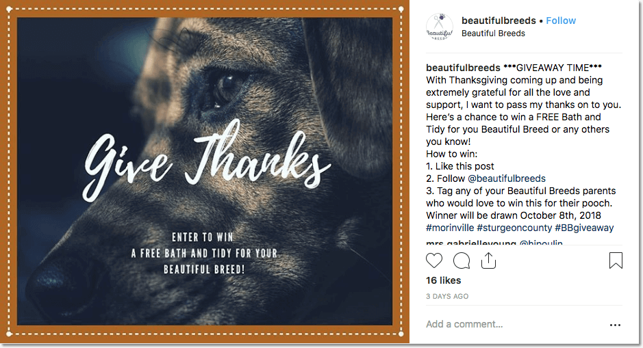 thanksgiving giveaway ideas: instagram giveaway for thanksgiving