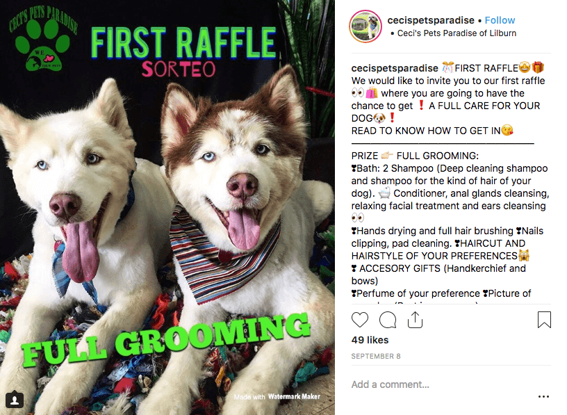 "Example of a World Animal Day promotion on Instagram. The image shows two young husky dogs, and the overlay text reads ""first raffle: full grooming"". The caption explains the details of the prize and how to win."