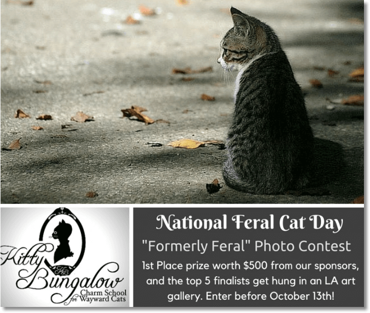 National feral cat day photo contest