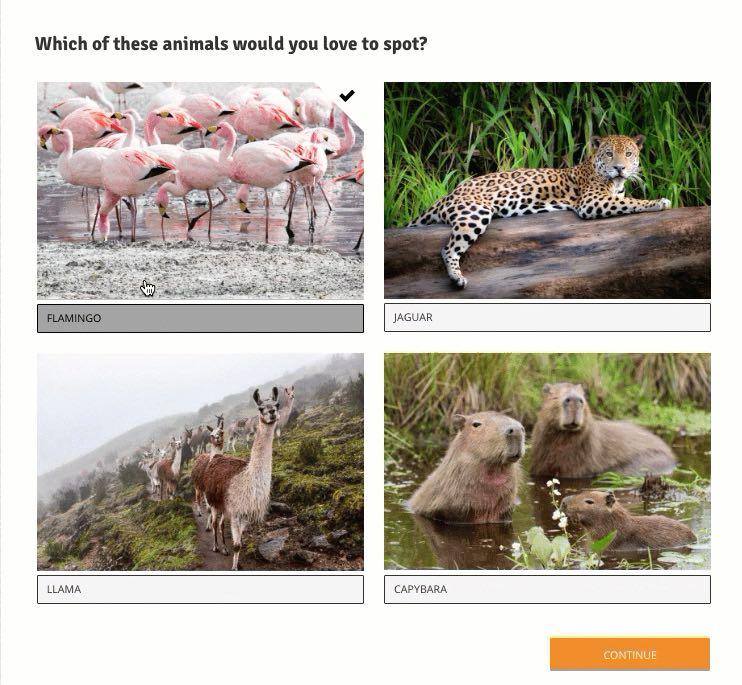 quiz examples app