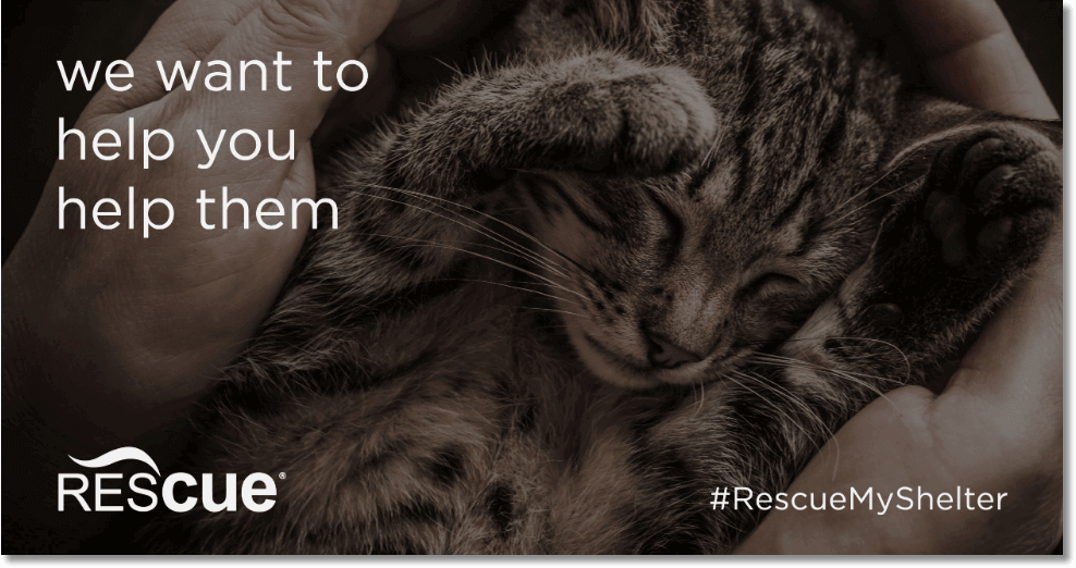 "Banner announcing the contest #rescuemyshelter. The title is ""We want you to help them"", and the photo shows a sleeping kitten."