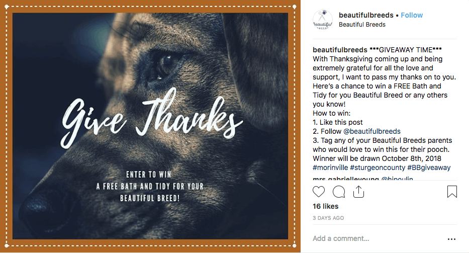 Thanksgiving giveaways Instagram