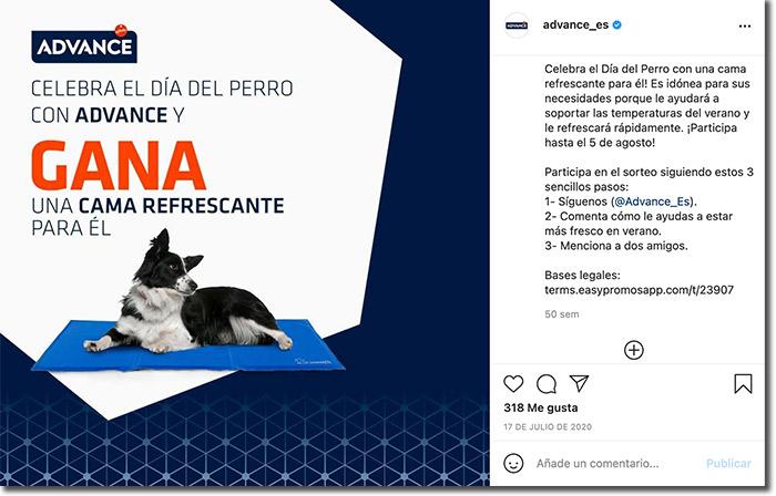 ideas para el día el perro: ejemplo de sorteo de comentarios en Instagram