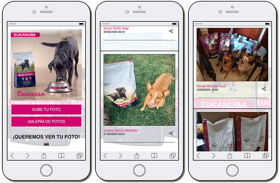 concurso de mascotas online de Eukanuba