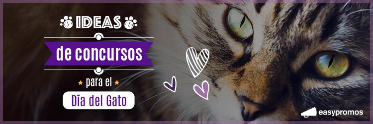 ideas de concursos para el dia del gato