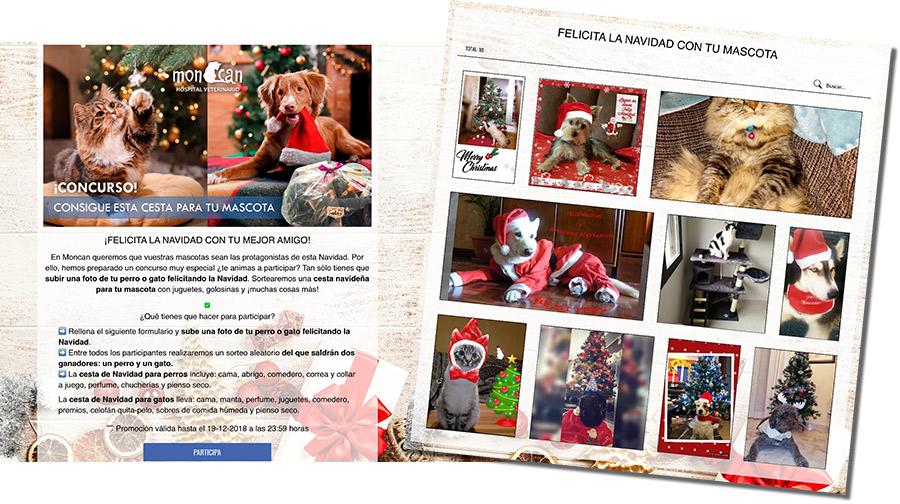 concurso de mascotas online de Moncan