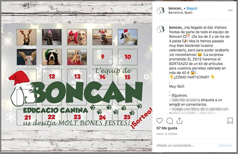 ejemplo de sorteo en instagram del sector mascotas