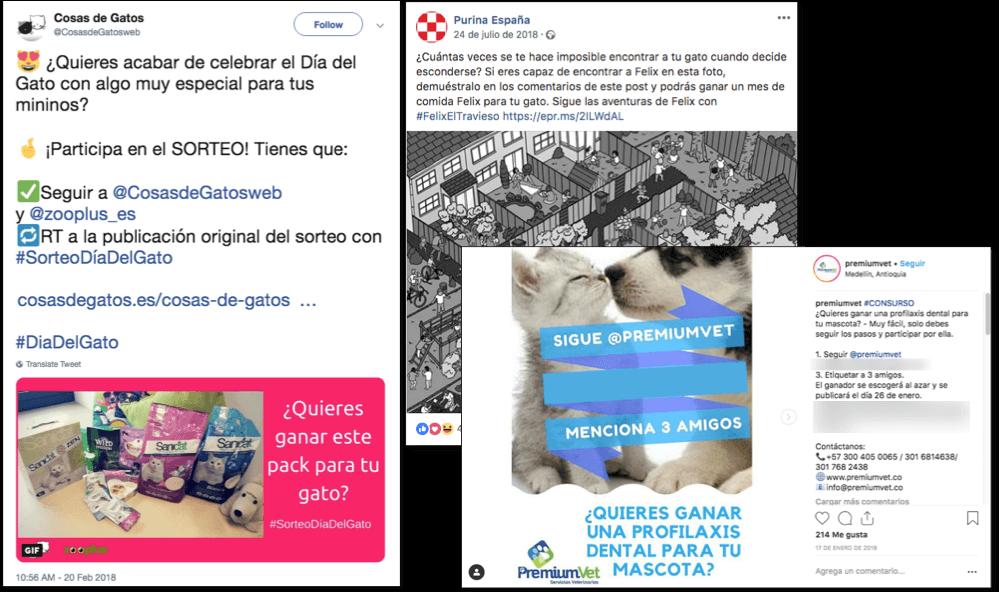 sorteo facebook instagram dia del gato