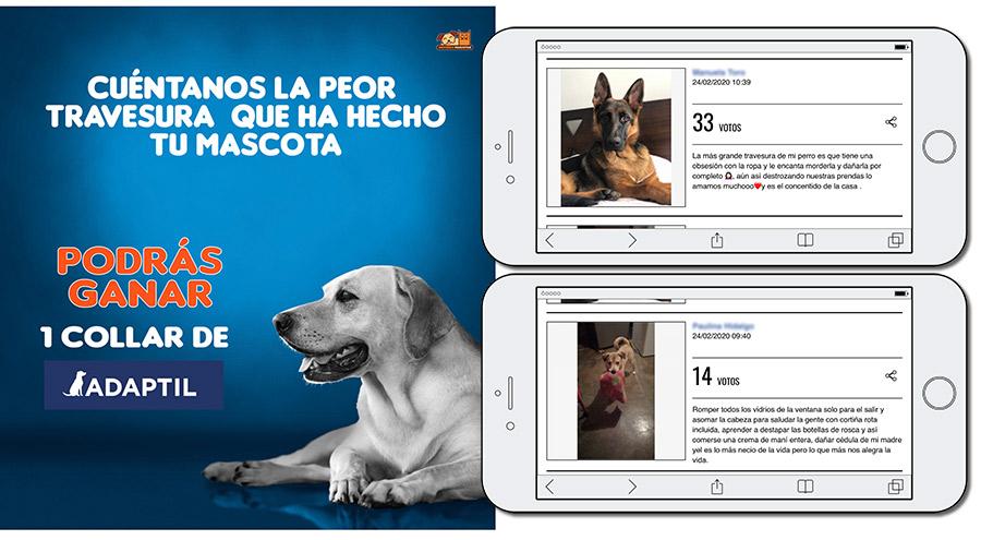 concurso de mascotas online de Universo Mascotas