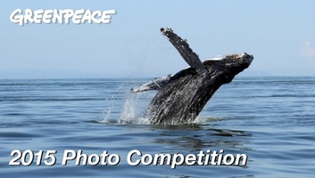 Greenpeace Canada Facebook Photo Contest Exceeds Goals by 600%